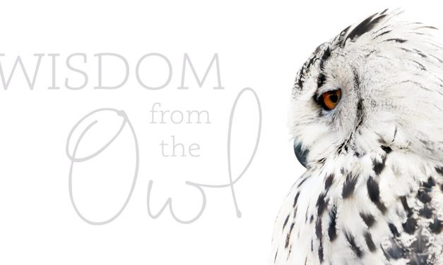 Wisdom from the Owl