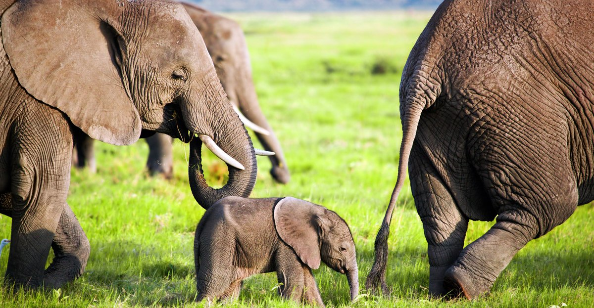 Tusk-to-Tail Wellness Pointers Inspired by an Elephant