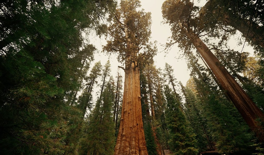 5 Trees of Life You Can Actually Visit