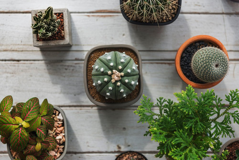 5 Easy Houseplants