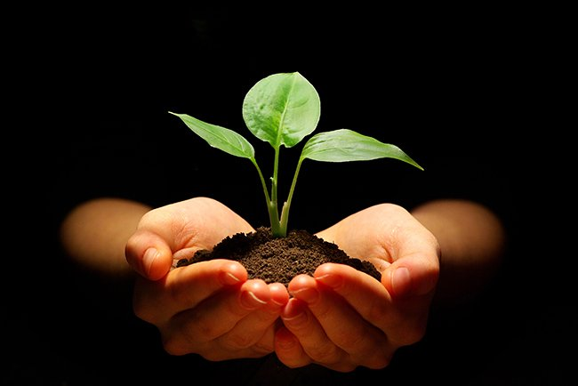 Inspiring Chinese Proverb – The Best Time To Plant A Tree Was 20 Years Ago, The Second Best Time Is Now