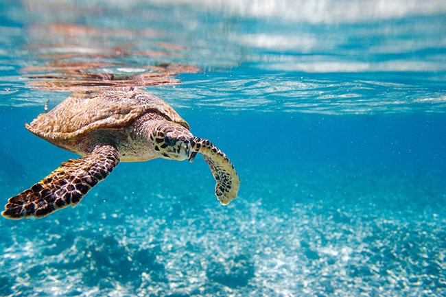 3 Life Lessons From A Sea Turtle