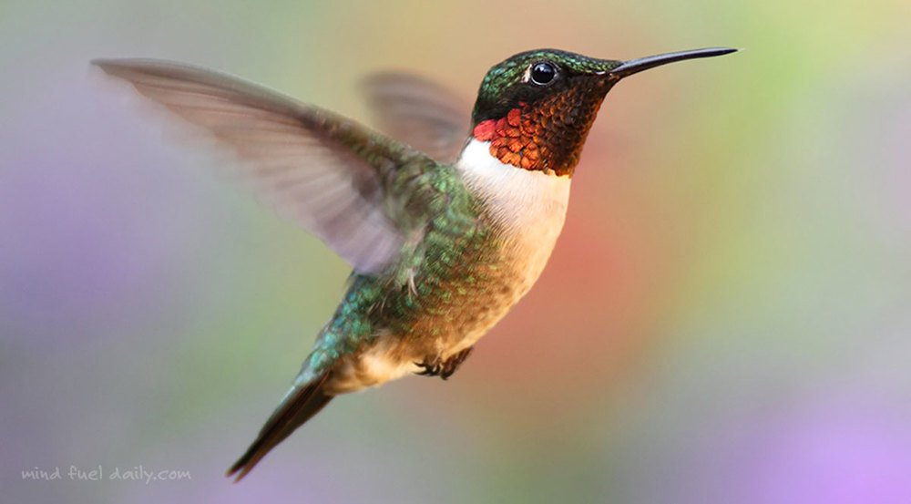 5 Life Lessons from a Hummingbird