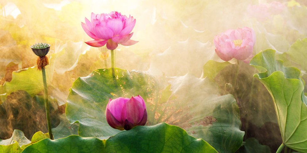 Symbolism of the Lotus Flower