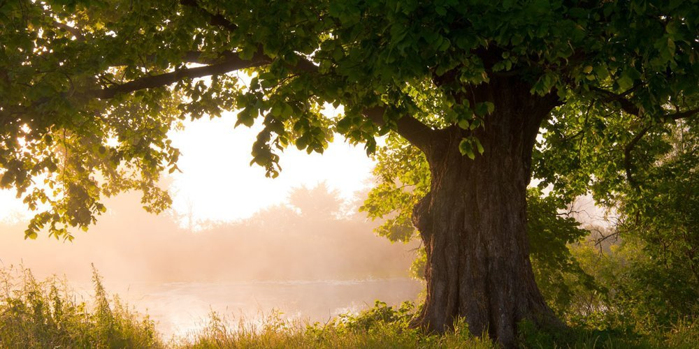 10 Things to Know About the Tree of Life