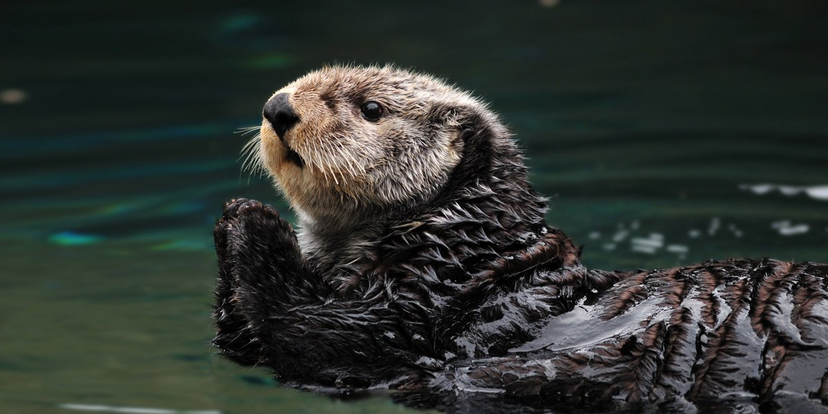 What Otters Can Teach Us