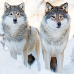 Inspirational Story: Choosing the Wolf to Feed