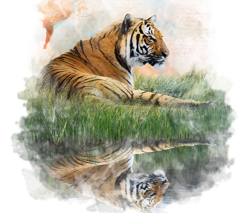 7 Larger-Than-Life Lessons From A Tiger