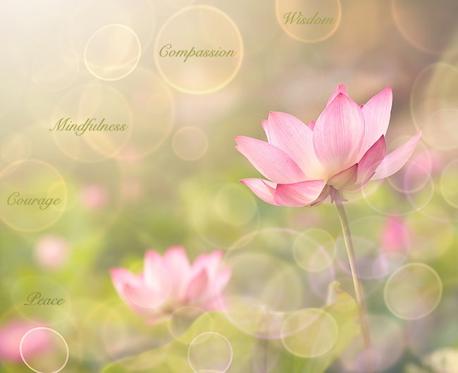 How the Lotus Flower Symbolizes Compassion, Courage, Mindfulness, Peace, & Wisdom