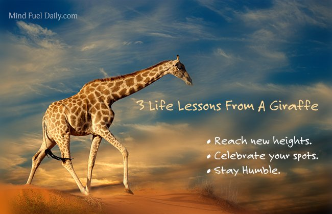 3 Life Lessons From A Giraffe