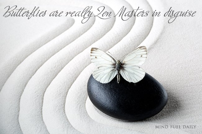 5 Reasons Why Butterflies Are Really Zen Masters in Disguise