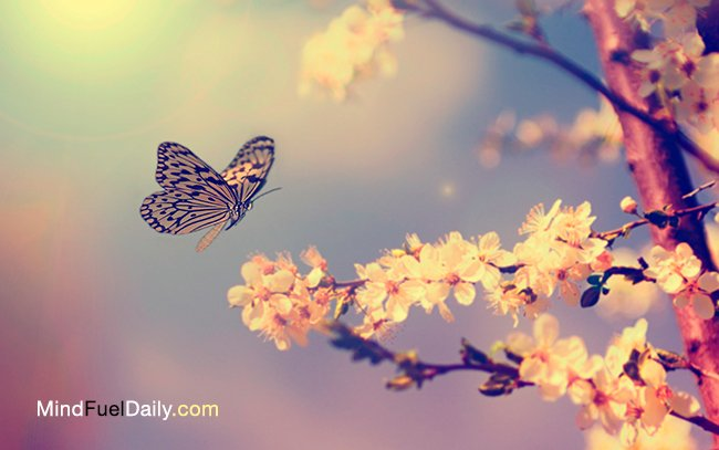 5 Life Lessons From A Butterfly