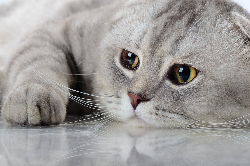 Key Things We Can Learn from Cats