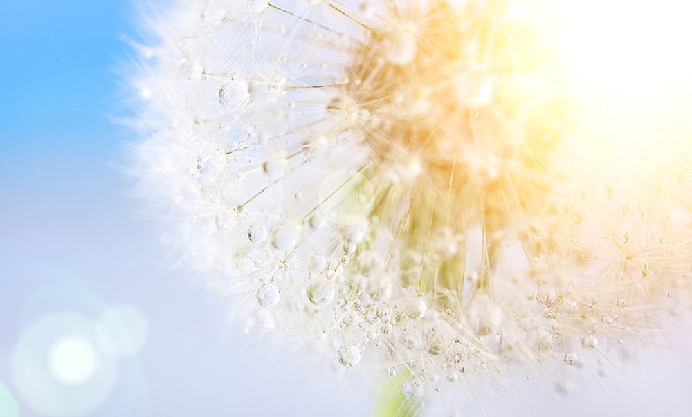 5 Thoughts on Joy from Spiritual Teachers
