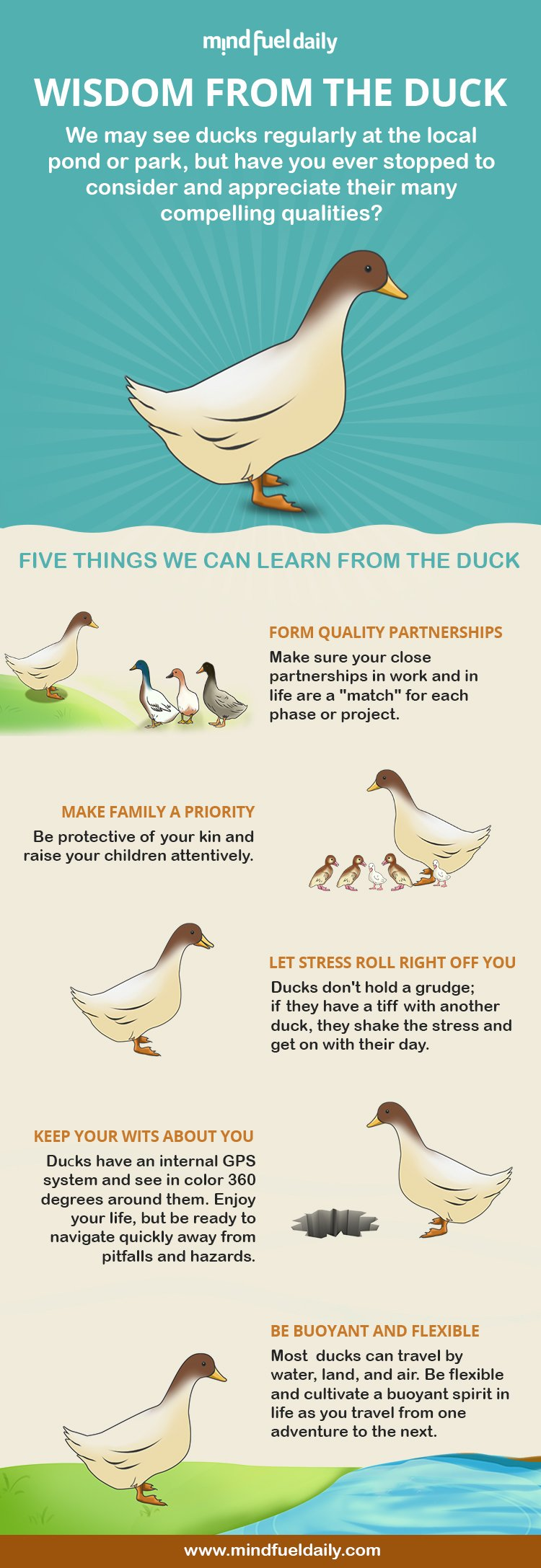 5 Things We Can Learn From Ducks
