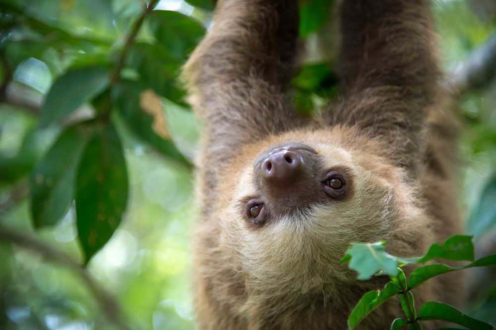 Be Yourself: Lessons from the Sloth