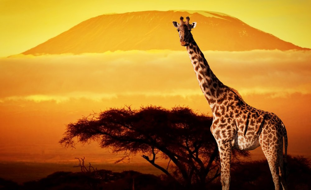 Stand Tall: Lessons from Giraffes